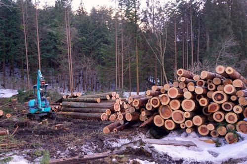 材木の搬出