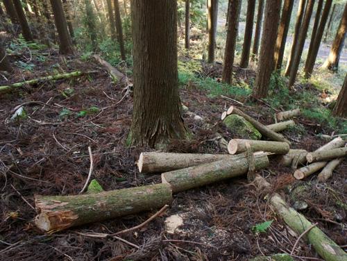 山で薪を集める